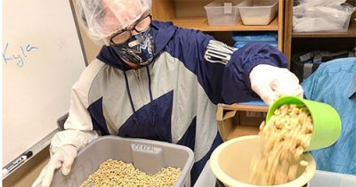 Volunteer with Didlake's Day Support Program pouring food into a container at a food pantry in Northern Virginia.